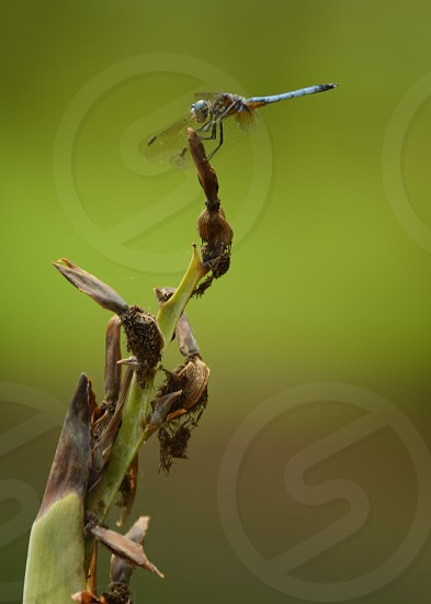 Dragonfly perching photo