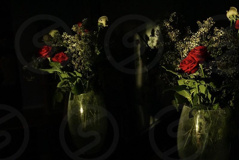 Elegant black; red roses; roses; reflections; black reflections  photo