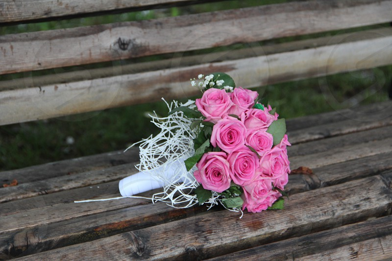 bouquet of pink roses on a wooden bench photo