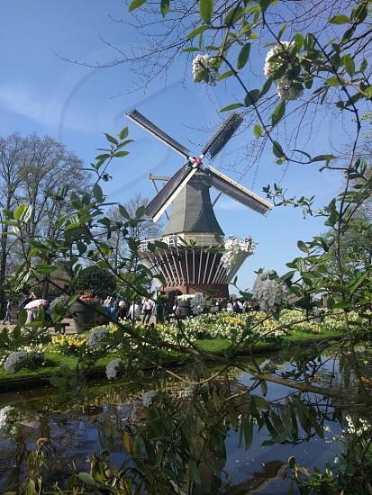 Netherlands; Holland; Keukenhof; flowers; mill; beautiful; nature photo