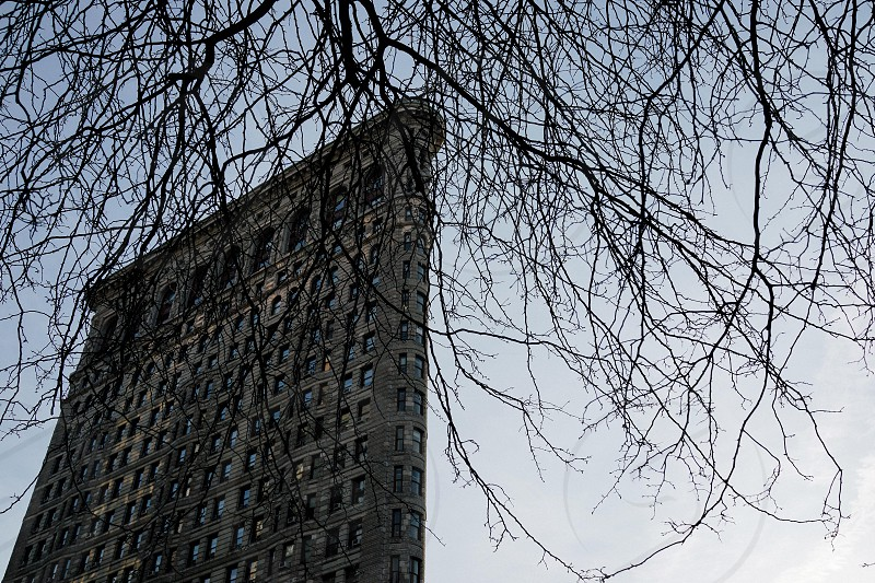 leafless tree near high-rise building photo