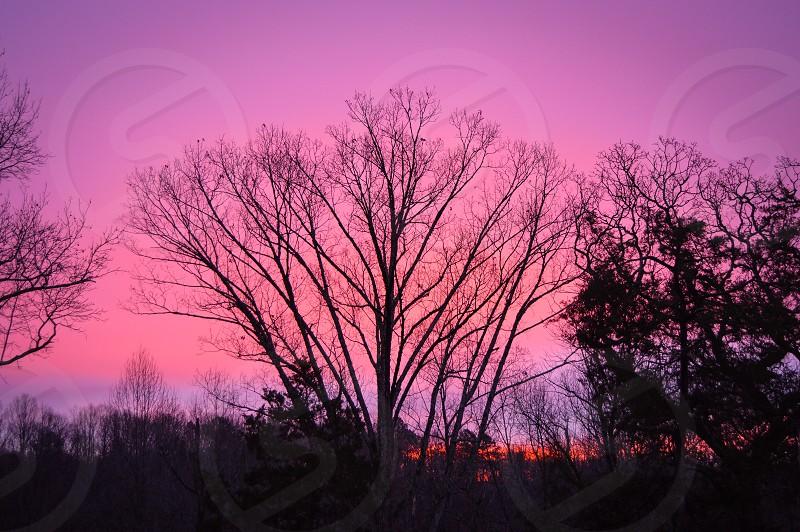 sunrise backyard pink skies purple skies North Carolina Raleigh winter forest trees silhouette nature landscape good morning photo