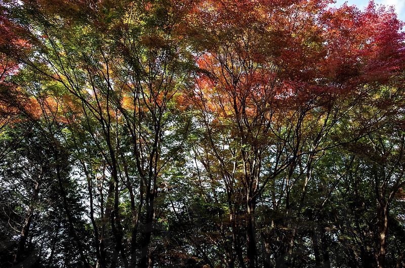 比叡山延暦寺にて。 photo