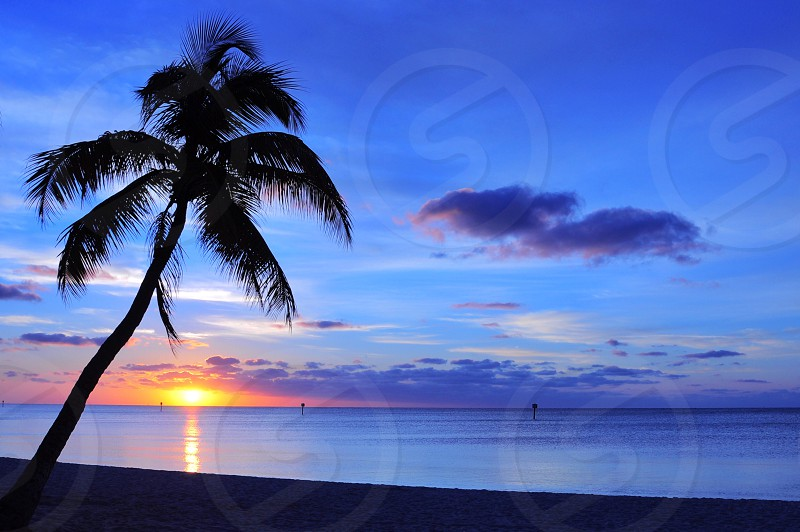 coconut palm tree near at the beach during sunrise photo