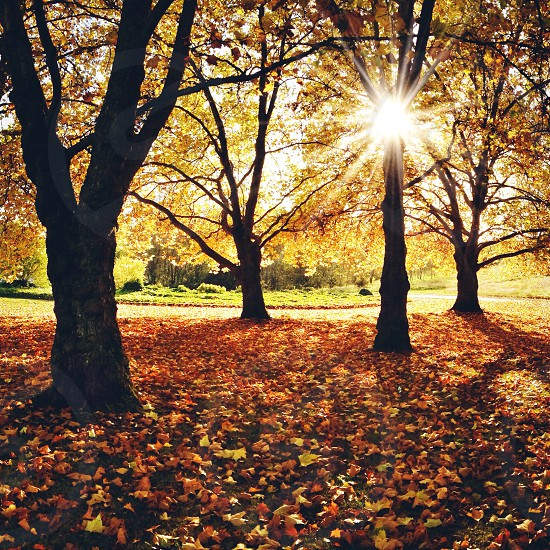 sunlight filtering through the brown leaves of trees photo