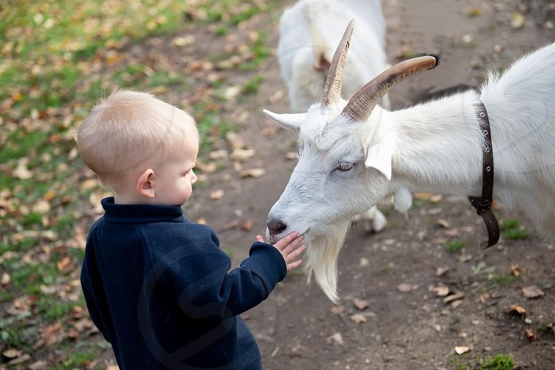 A little boy hugging a white goat. photo