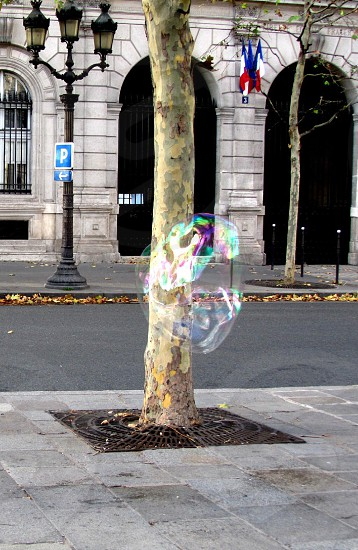 bubble floating near tree on roadside during daytime photography photo