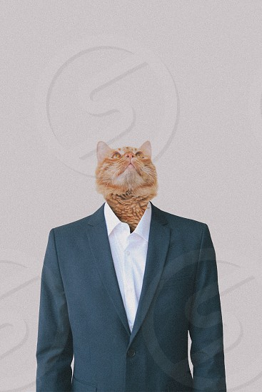 man in black suit with cat head photo