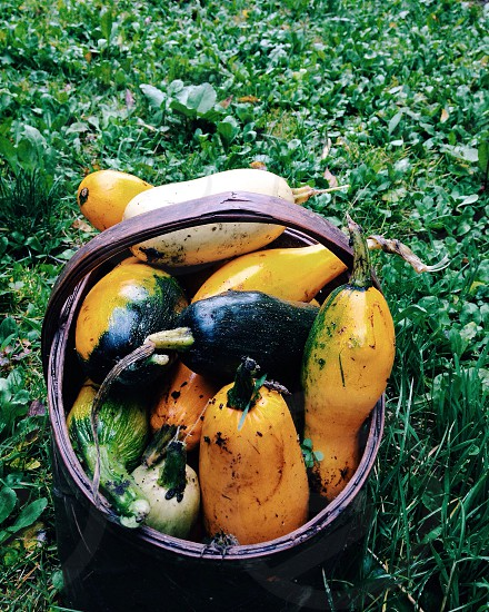 yellow and green gourds in a basket in green clovers photo