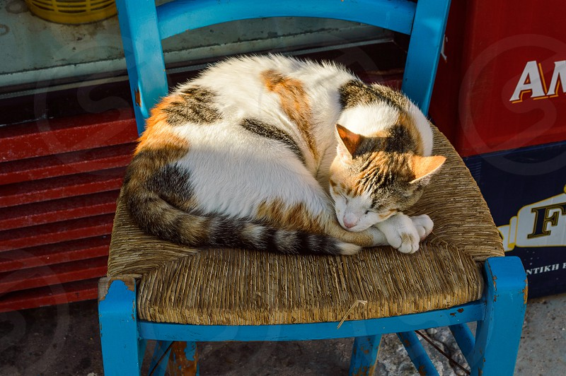cat sleeping on the chair under the Greek sun photo