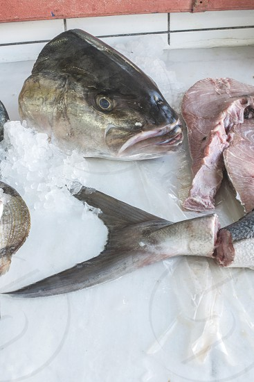 Fish on ice in the market. photo