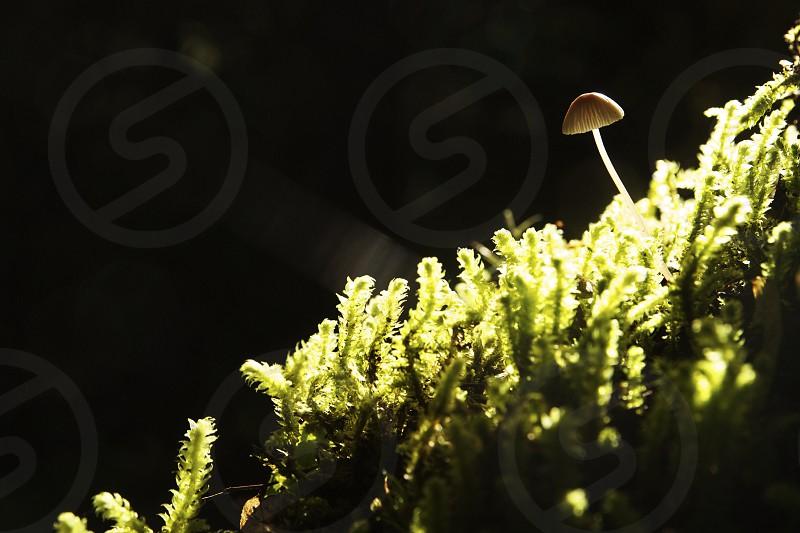 brown mushroom photo