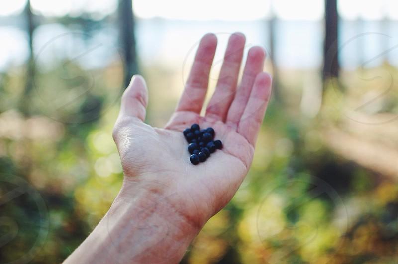 black round fruit photo
