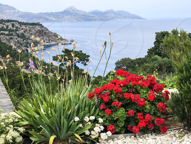 nature outdoors landscape view background flowers colorful flower garden flowering mountain resort sea ocean by susanne alfredsson photo stock snapwire photo by susanne alfredsson nature outdoors landscape view background flowers colorful flower garden flowering mountain resort sea