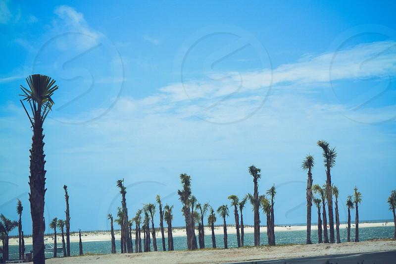 Ocean beachvacation travel Alabama gulf shores fort morgan Palm trees orange beach photo