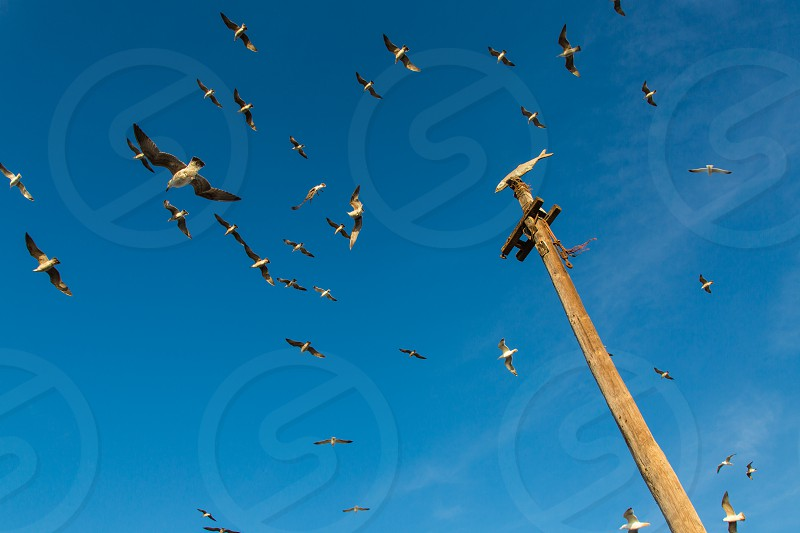 Gulls and a memorial of their catch in Essaouira Morocco photo