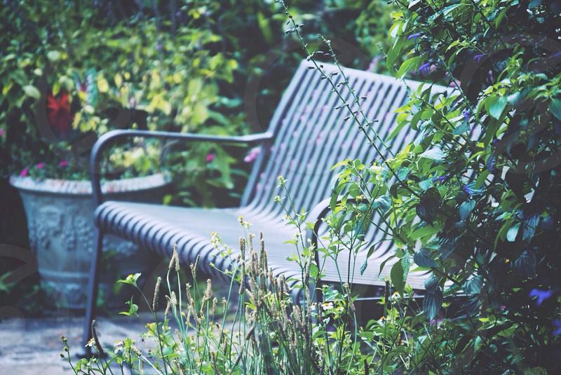 black metal outdoor bench beside plants photo