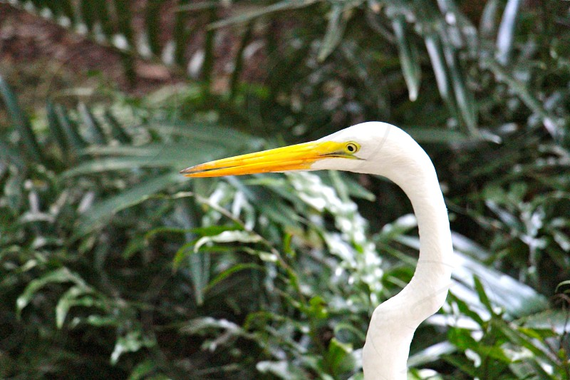 white bird with long yellow beak near green plants photo