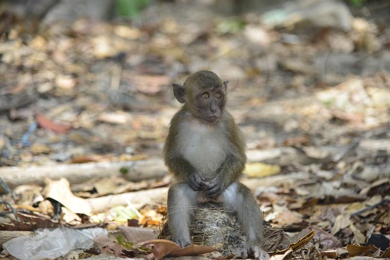 monkey nature  Phuket photo