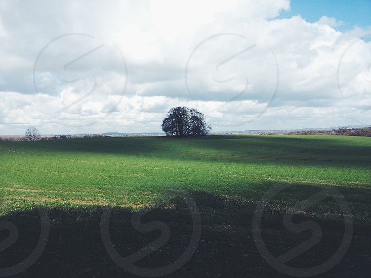 trees on the top of a green hill photo