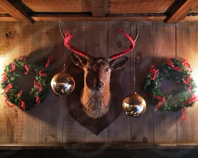 wall mounted deer head photo
