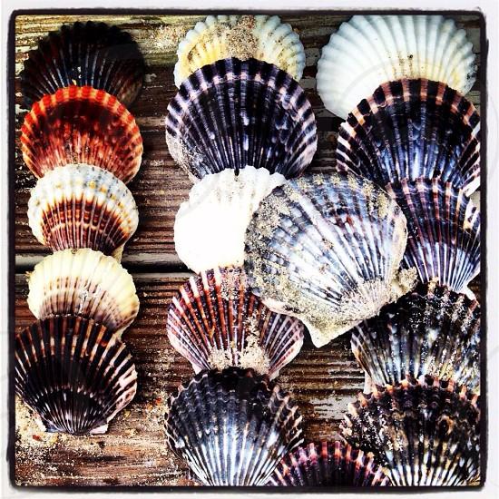 black and white seashells photo photo
