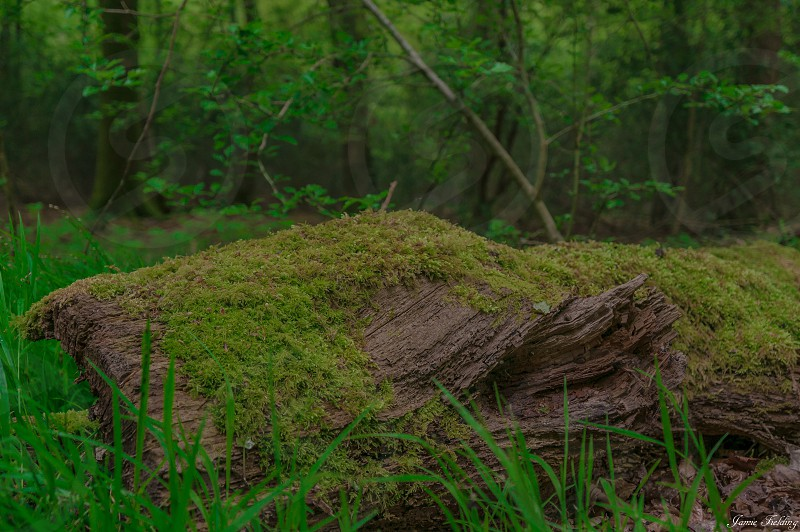 Log tree green moss plant woods wood forest  photo