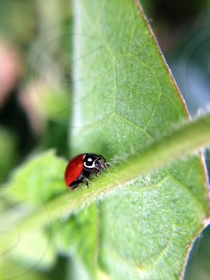 Ladybug with green background photo