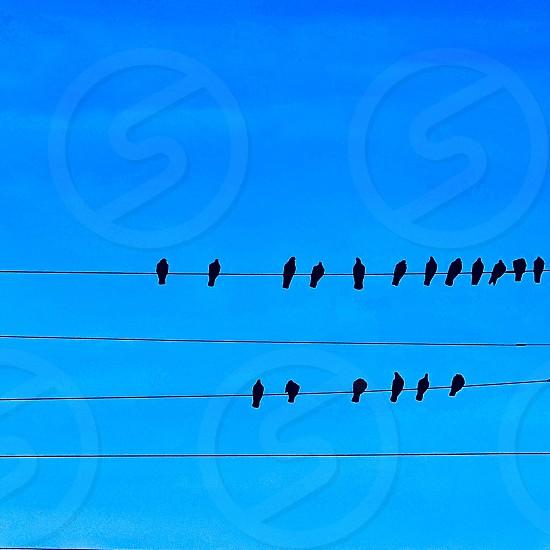Birds on wire photo