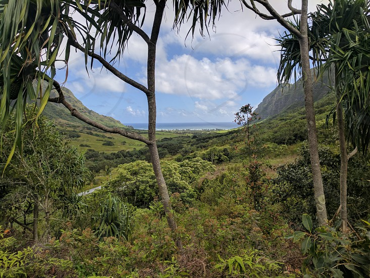 Spring on Oahu. Photo taken at Kualea Ranch - famous for being the location for LOST Jurassic Park and many other films and TV shows photo