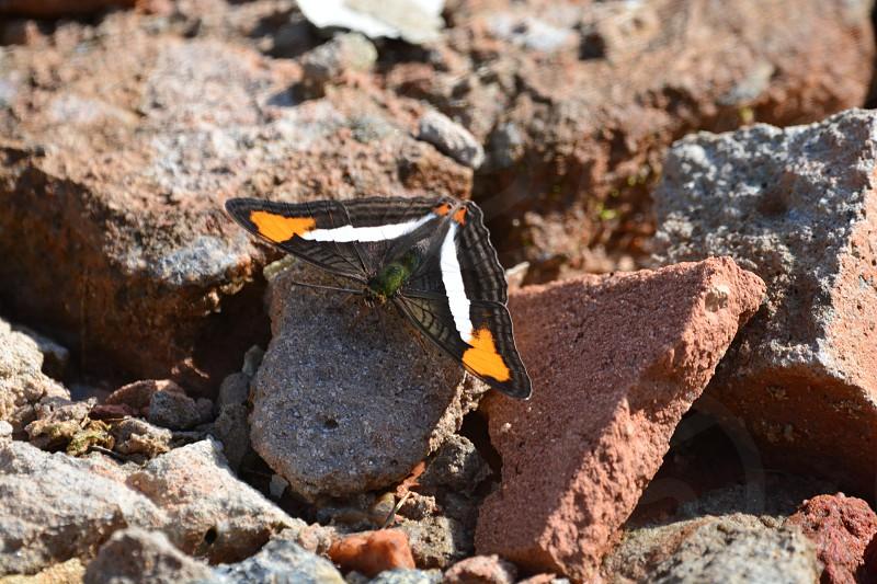 Butterfly Atibaia SP Brazil photo