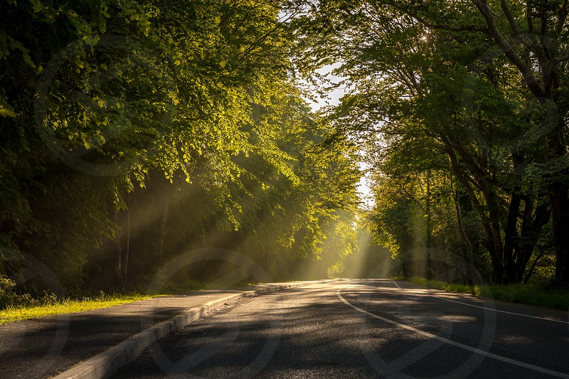 Road trees rays woods summer photo