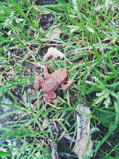frog on the green grass photo