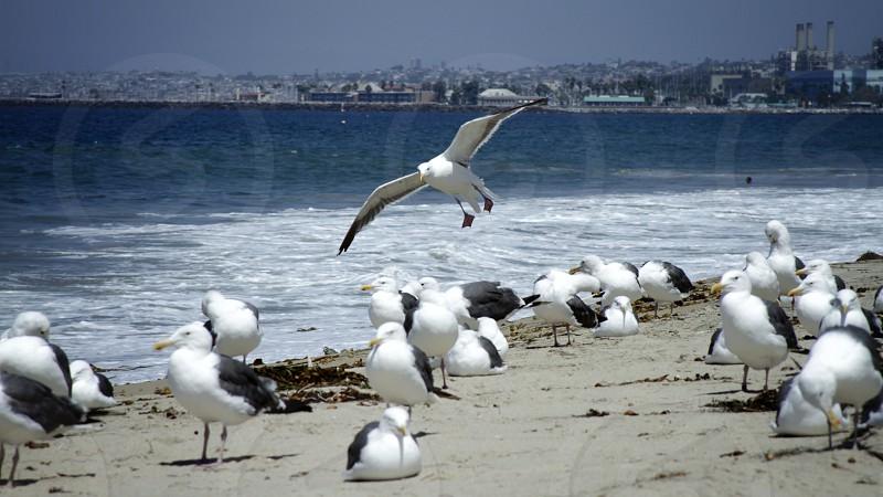 Beach seagull sand water waves photo