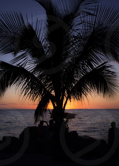 Palm sunset silhouette  photo