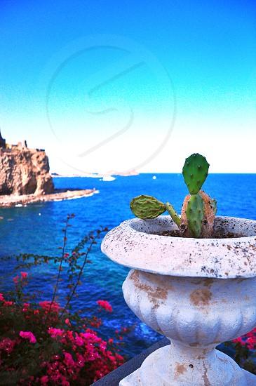 Cactus in vase - Acitrezza Sicily photo