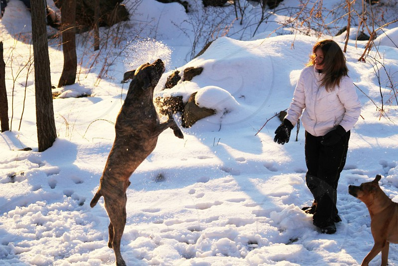 woman and 2 dogs playing with snow photo