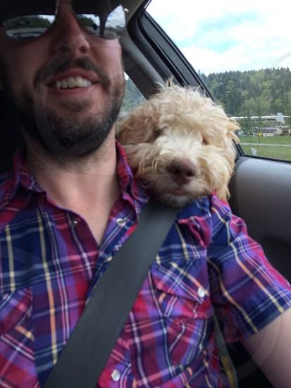 Pup on my shoulder driving.  photo
