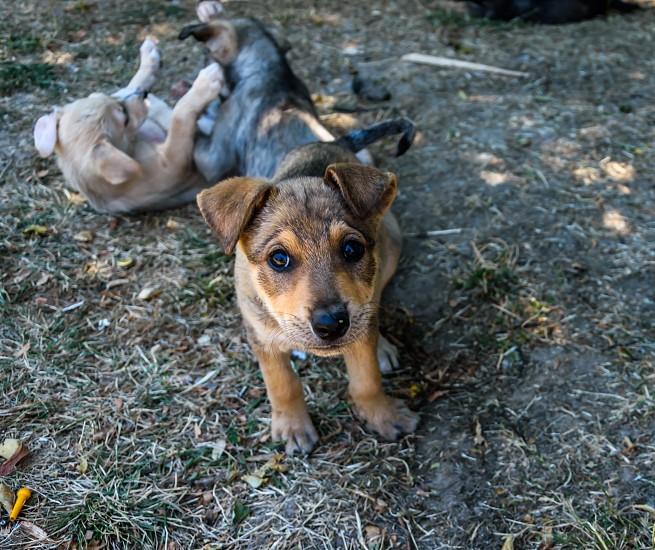Cute puppy with big eyes photo