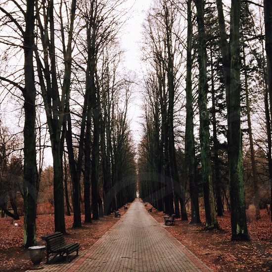 black wooden bench and bare trees on pathway side during daytime photo