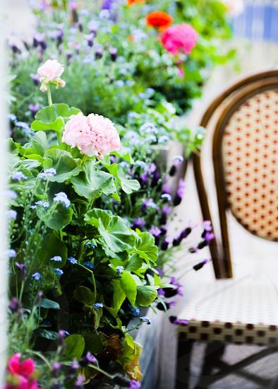 Flowers flower plants outdoors seat rest garden beauty nature soft  pieceful patio photo