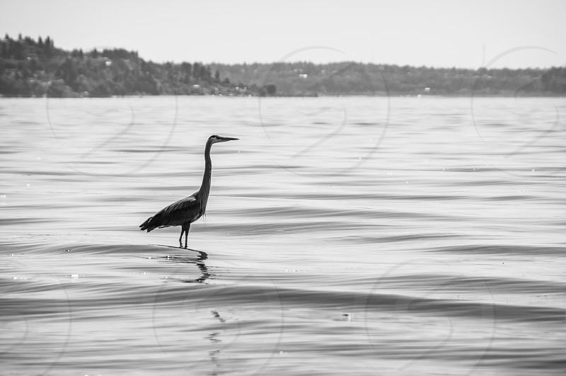 Blue Heron Saltwater State Park Des Moines WA photo