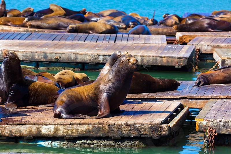 San Francisco Pier 39 lighthouse and seals at California USA photo