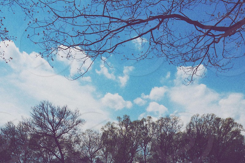 photo of bare trees and blue sky photo