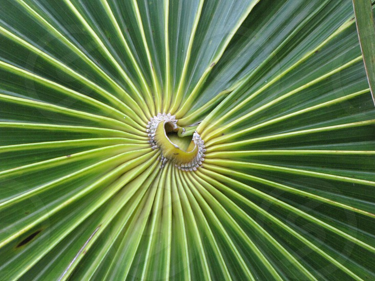 Palm frond closeup photo