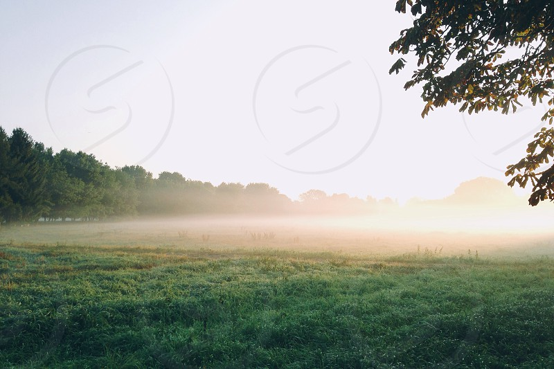 thin fogs over grass field under grey sky photo