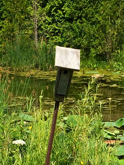 wooden post near pond and grass field photo