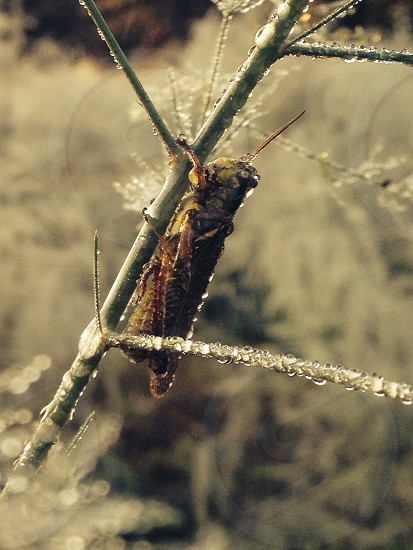 brown grass hopper on plant stem photo