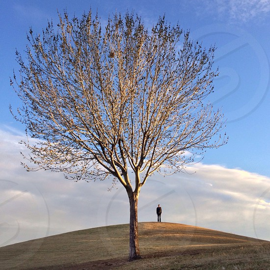 gray lonely tree branch and man photography photo