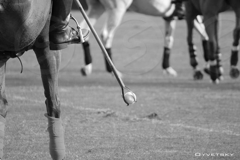 Polo Polo Ponies Mallet Boots Horseback photo